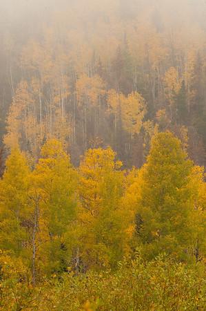 Walt Hester | Trail-Gazette<br /> Low clouds abscure autumnal aspens near Hidden Valley on Wednesday.