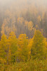 Walt Hester | Trail-Gazette<br /> Low clouds abscure autumnal aspens near Hidden Valley on Wednesday.