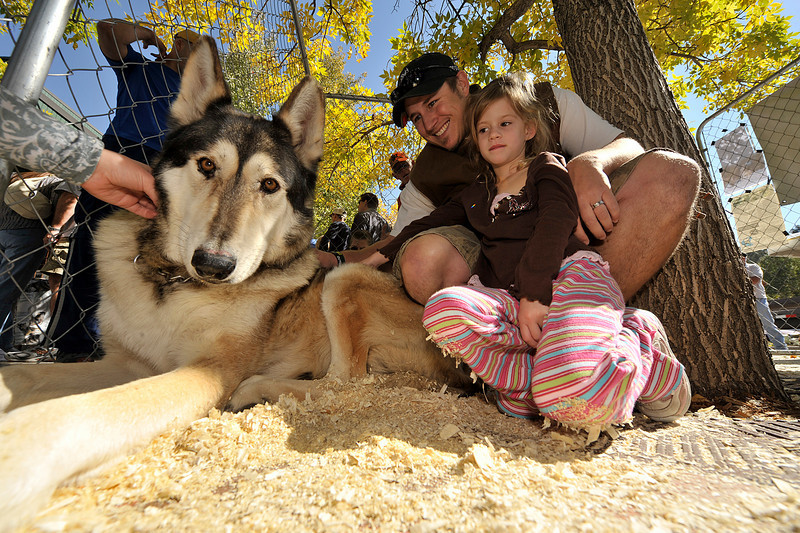 Walt Hester | Trail-Gazette<br /> A wolf mix named Willow poses with visitors Shea Owens, 4, and Blake Wollenburg, both of Erie, at the Elk Fest on Saturday. The wolves were from the Mission Wolf sactuary near Westcliff, Colo. and wereused to educate the visitors about the animals.