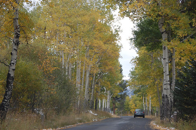 The aspen near Endovalley in Rocky Mountain National Park still retain many of their leaves, some still green. The recent coldsnap though has caused many of the trees to start loosing their fall colors. The result can be seen accumulating along the road.