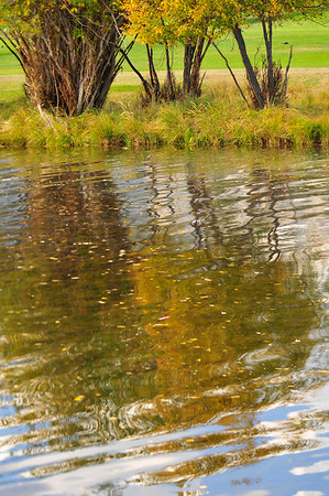 Walt Hester | Trail-Gazette<br /> Fall foliage floats and and reflects in the Big Thompson River along the Lake Estes 9-hole golf course on Thursday.