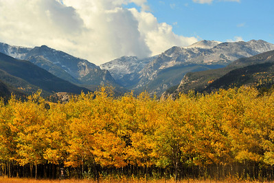 Walt Hester   Trail-Gazette Fall color covers the aspens in Moraine Park below the new snow on the national park's high peaks. Due to the snow, Trail Ridge Road was closed over the weekend and into Tuesday.