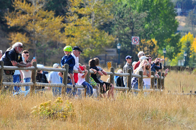Walt Hester   Trail-Gazette Visitors line the fence along the Lake Estes Nine-Hole golf course to get a good view of the elk herd lounging there.