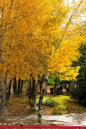 Walt Hester | Trail Gazette<br /> Leaves on aspens and on the ground make for a golden walk along West Riverside Drive on Monday. Sunshine should return for most of the week, though temperatures will remain on the cool side.