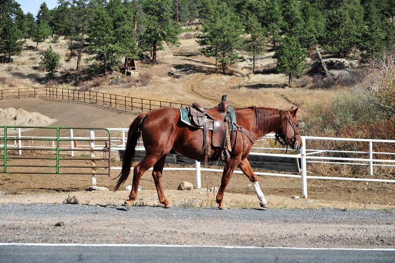 Walt Hester | Trail Gazette<br /> A riderless horse wanders past the Sombrero Stables on Friday. Traffic stopped to avoid hitting the animal.