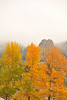 Walt Hester   Trail-Gazette<br /> The Twin Owls seem to perch in autumnal foliage on Friday.