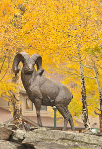 Walt Hester | Trail-Gazette Estes Park's ram statue peers over the intersection at the head of Elkhorn Avenue on Friday.