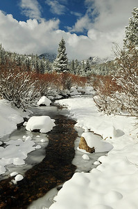 Walt Hester | Trail Gazette New snow flanks the Glacier Creek on Wednesday. Another round of snow is expected for Saturday.