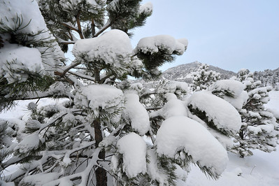 Walt Hester | Trail Gazette For the second Wednesday in a row, snow blankets Estes Park and chilly temperatures keep the white stuff around. This latest round dumped about five or six inches on the area.