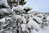 Walt Hester | Trail Gazette<br /> For the second Wednesday in a row, snow blankets Estes Park and chilly temperatures keep the white stuff around. This latest round dumped about five or six inches on the area.