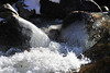 Walt Hester | Trail Gazette<br /> A Chilly Big Thompson River creates ice on rocks along the river on Wednesday.