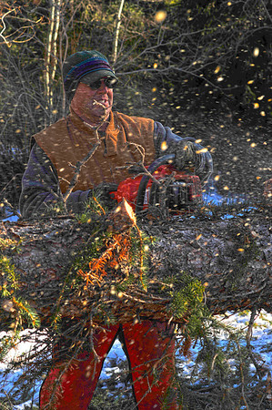 Walt Hester | Trail Gazette<br /> Mike Mangleson cuts up a downed tree for removel along Fall River Road on Wednesday. Town employees, tree services and volunteers are helping with the clean up from the weekend's wind storm.