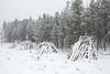Slash piles along Bear Lake Road in Rocky Mountain National Park are covered in snow from a storm that moved through the area Nov. 18 and 19.