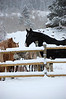 Horses gather near the fence Saturday at the Cheley Camp. The area received new snow Saturday, with more forecast for Monday.