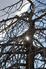 Walt Hester | Trail-Gazette<br /> Winter sun peeks through branches of a gnarled tree along Morain Avenue on Tuesday.