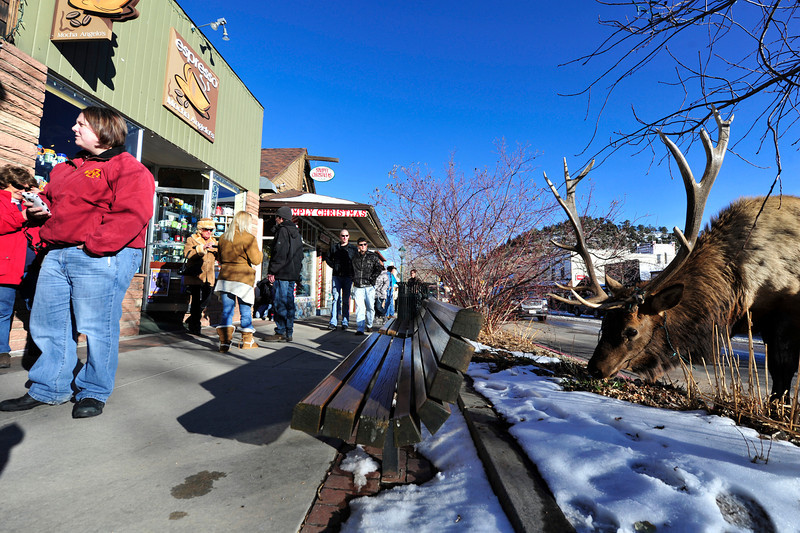 Walt Hester   Trail Gazette<br /> A crowd gathers along Elkhorn Avenue to photograph a bull elk with a string of lights in his antlers. The bull had been feeding when his antlers became tangled, but he easily pulled himself free, though bringing the lights with him.