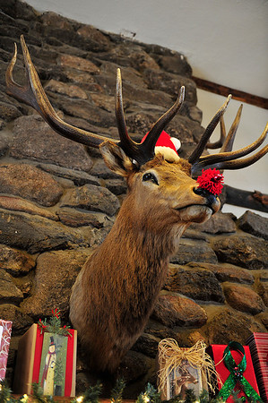 A festive elk bust looks out over the main lbby of the registration building at the YMCA of the Rockies on Wednesday. Visitors to the YMCA will have plenty of Christmas decorations to enjoy.