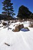 Walt Hester | Trail Gazette<br /> Bright white snow contrasts with deep blue sky over Moraine Park on Tuesday. Clouds should alternate, clouds Friday, sun on Saturday, possible snow on Sunday.