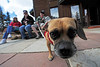 Walt Hester | Trail Gazette<br /> A puggle, beagle-pug mix, named Holly investigates a visitor for traveling companions, from feft, Jan Callahan of Broomfield, Sylvia Jackson of Denver and Michelle Callahan of Denver. Many Front Range visitors were enjoying the warm temperatures in Estes Park on Wednesday.