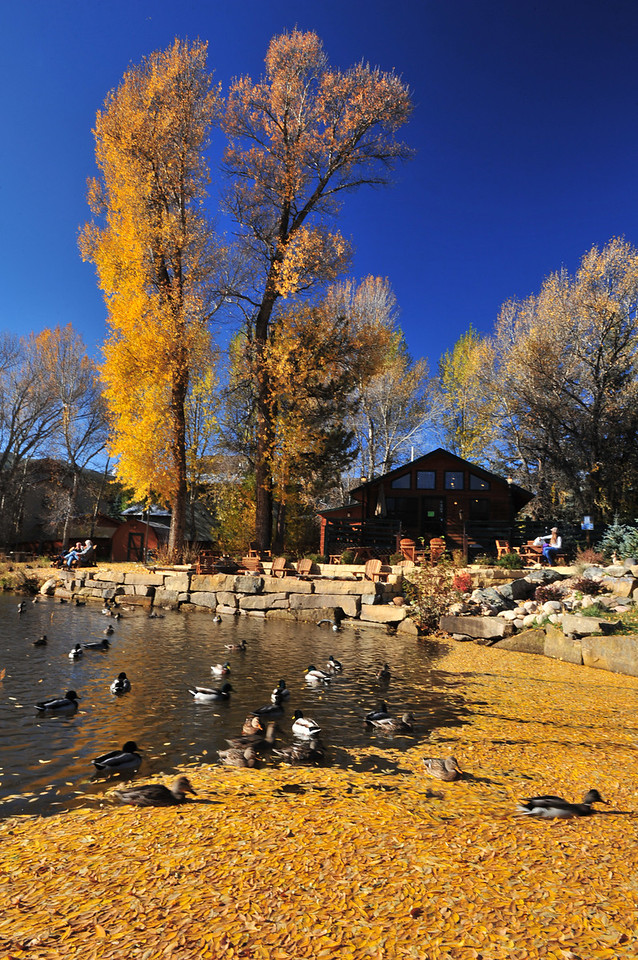 Ducks chase each other through fallen leaves on a pond near Moraine Avenue on Wednesday. The pond sustained some damage from the September flood but now seems back to normal.
