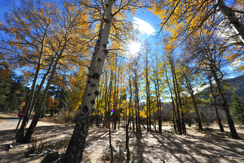 Autumn sunshine pours through aspens in West Horseshoe Park on Wednesday. Much of the colorfull foliage still remains in the national park.