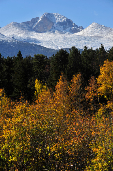 Longs Peak peers over aspens on Bear Lake Road on Wednesday. Plenty of golden fall foliage remain as the park remains open after the end of the federal budget impasse.