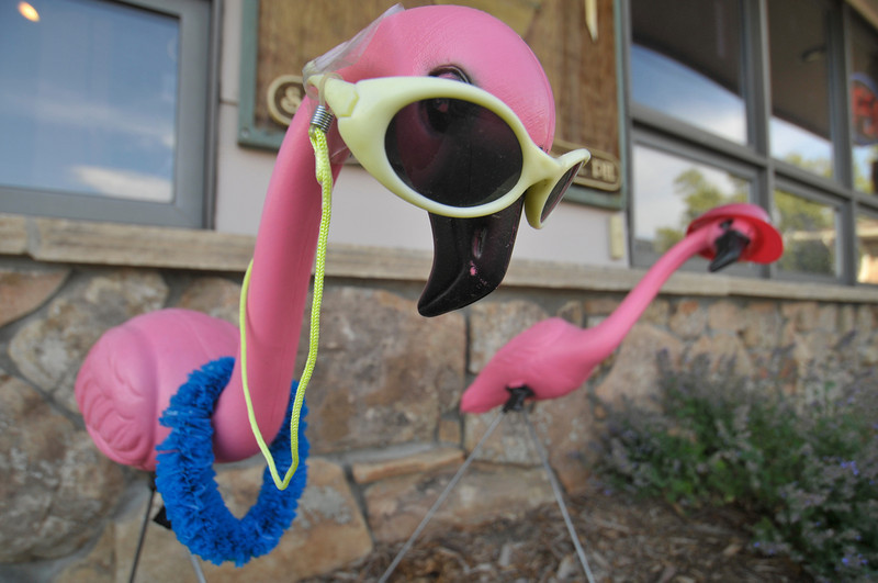 Photo by Walt Hester<br /> Stylish lawn flamingos decorate a business along South St. Vrain Avenue on Tueday.