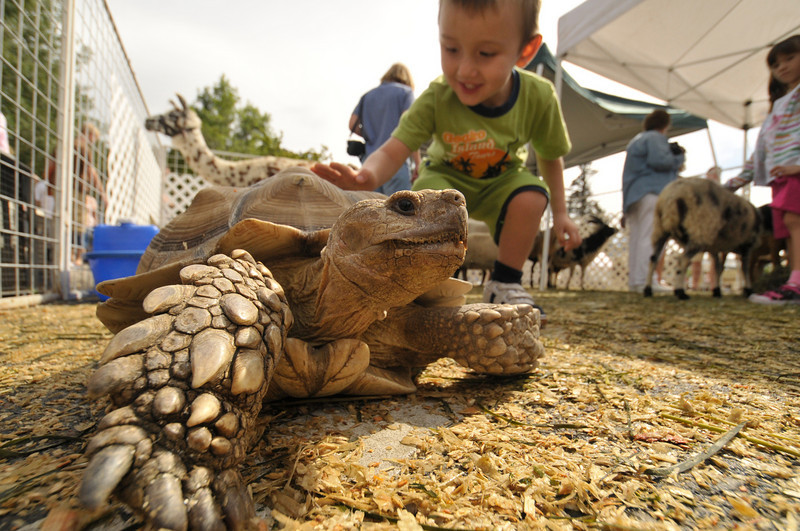 Photo by Walt Hester<br /> A young boy pets the shell of a tortoise in the petting zoo at the annual Heritage Festival at Bond Park. Demonstrations and activities will amuse and educate visitors to the festival celebrating Estes Park's early years.