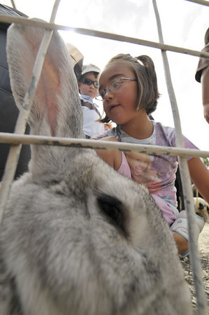 Photo by Walt Hester <br /> Breanna Jara, 6, of Wellington finds the large rabbit in the petting zoo during the festival on Sunday. The petting zoo gave children the opportunity to touch donkeys, goats, ducks and other livestock they might not otherwise see.