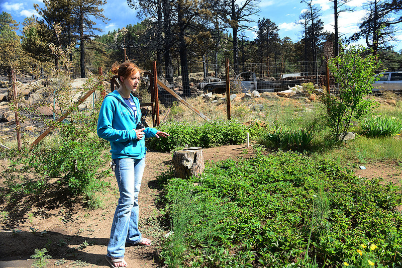 "Walt Hester | Trail Gazette<br /> Volunteer firefighter Emily Franklin looks over all that remains of her family's home, the peas and berries of her family's garden on Tuesday. ""My mom asked the firefighters to water it for us,"" said Franklin."