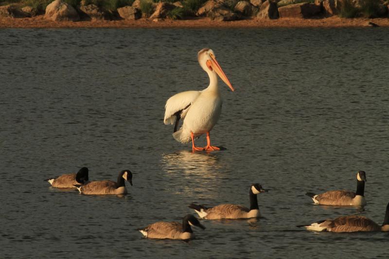 Wildlife in Estes Park