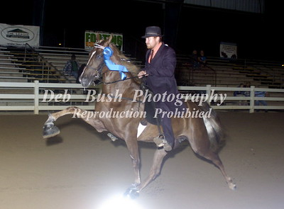 CLASS 42  - 4 YR OLD MARES & GELDINGS  RC