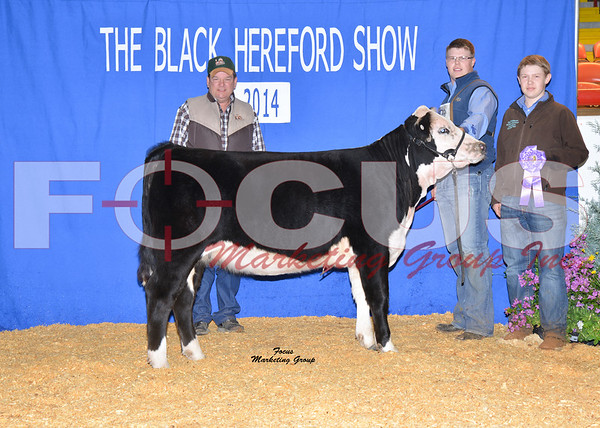 2014 Black Hereford Show