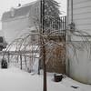 snow pics 1-19-110004
