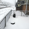 snow pics 1-19-110005