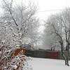 snow pics 1-19-110011