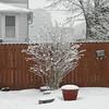snow pics 1-19-110001