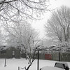 snow pics 1-19-110002