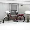 snow pics 1-19-110008