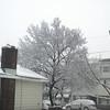 snow pics 1-19-110012