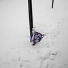 snow pics 1-19-110009