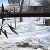 snow 1-30-090005