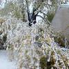 snow storm 10-28-080009