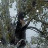 snow storm 10-28-080007