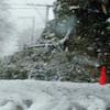 snow storm 10-28-080013