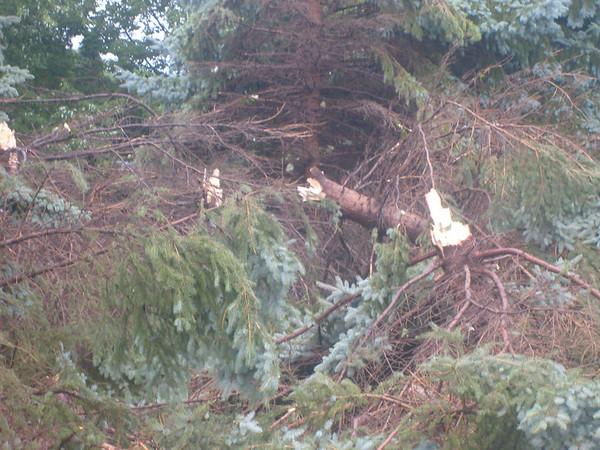 Storm damage 8-25-07
