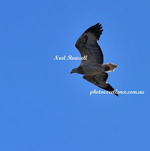 Eagle NRR_9613
