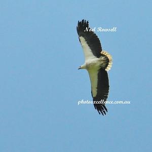 Eagle NRR_5931