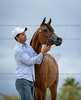 Arabians International : 26 galleries with 502 photos