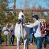Arabians Int  Open House-139